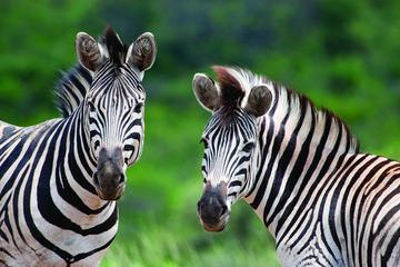 Geführte Tagestour - Cape-Safari ab Kapstadt