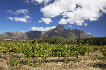 Private Führung: Stellenbosch und Franschhoek Wein, Kultur und...