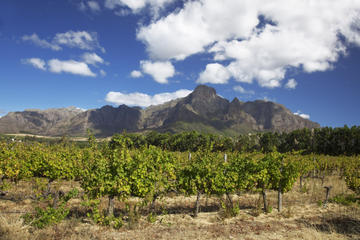 Private Stellenbosch and Franschhoek...
