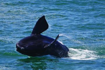 Whales and Wine Guided Day Tour from...