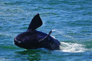 Wine-Tasting and Whale-Watching Tour...