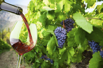 Tour dei vigneti e degustazione vini per piccoli gruppi a Santorini