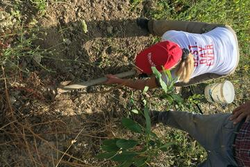 In Focus: Healing Nature Small Group Eco Tour Including Planting a Tree