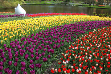 Private Tour: Keukenhof Gardens Day Trip from Brussels