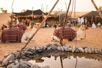 Dubai Bedouin Culture Tour with Wildlife Safari and Breakfast