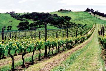 Visita con cata de vinos a la isla de...