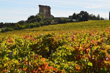 5 hours Châteauneuf-du-Pape Visit and Tasting in 5 Cellars with Wine Specialist