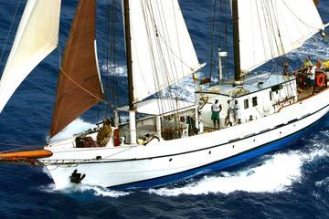 St Maarten Gourmet Sailing and Snorkel Cruise