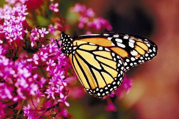 Visite privée: Vallée des papillons à Rhodes