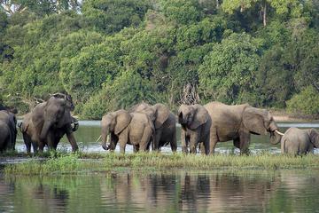 3 Day Safari tour to Selous Game ...