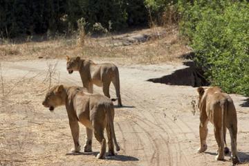 4-Day Ruaha National Park safari tour ...