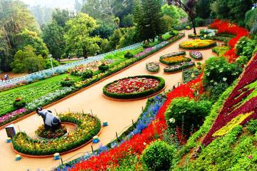 Mountains and Serenity: A Tour of Ooty