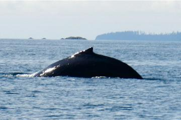 Sitka Shore Excursion: Whale-Watching and Marine Life Tour