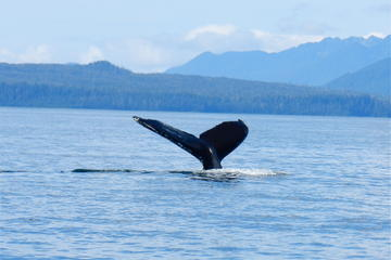 Sitka Whale-Watching and Marine Life...