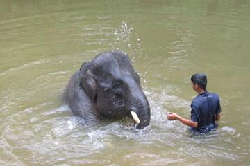 Nursing with Love at Elephant Sanctuary