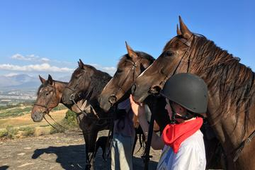 Horse Trail Experience in Paarl