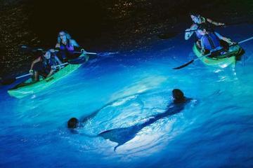 Night Kayak Tour in St Thomas