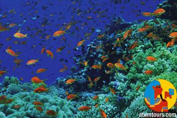 Boat Trip 2 Snorkeling and 1  Diving in  Tiran Island Sharm el Sheikh