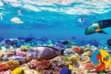Boat Trip Snorkeling and Diving in Ras Mohamed Sharm el Sheikh