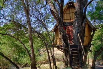 4 Day Lodge and Treehouse Kruger...
