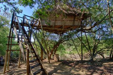 6 Day Lodge and Treehouse Kruger...
