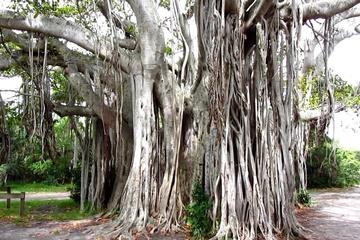 Day Trip 1-Hour Bike Tour of Hugh Taylor Birch State Park near Fort Lauderdale, Florida