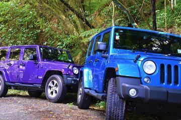 Tour privato della jeep forest di 4