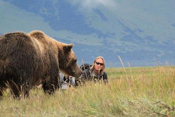 Gita di un giorno nella foresta degli orsi dell'Alaska a Katmai o al