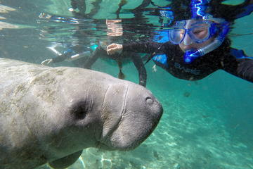 Day Trip Swim with Manatee Adventure! near Crystal River, Florida