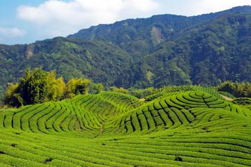 台北の茶園:台北市内観光を兼ねた小グループ ツ…