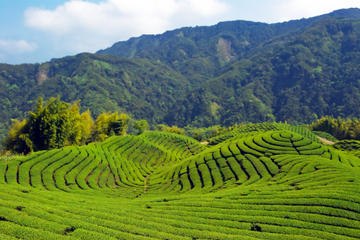 Tea of Taipei: Small-Group Tour with Taipei City Sightseeing
