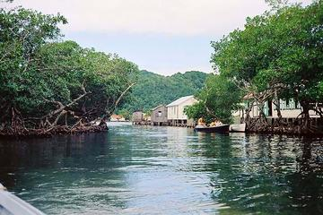 Roatan Mangrove Tunnel Eco Tour And Beach