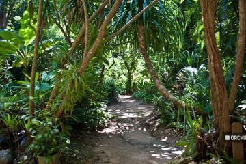 Roatan Nature Eco Walk Butterfly Garden Tour and Carambola Garden And Beach
