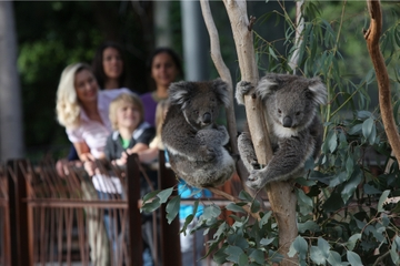 Entrée générale au zoo de Melbourne
