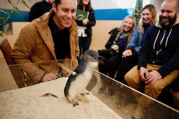 Little Penguin Experience at Melbourne Zoo