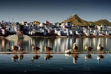 Same Day Pushkar Trip