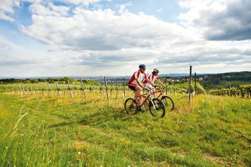 Excursão privada: Passeio de bicicleta pelos bosques de Viena e...