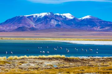 Altiplanic Lagoons and Atacama Salt Mines Day Trip