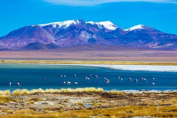 Escursione di un giorno al deserto di sale di Atacama da San Pedro de