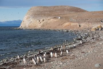 Excursión con pingüinos en Isla Magdalena en barco desde Punta Arenas