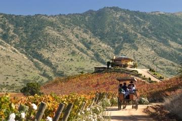 Viagem de um dia inteiro para degustação de vinho nas vinícolas do...