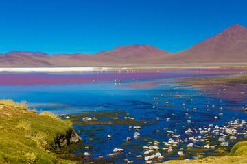 Visite des lagons de sel d'Atacama, y compris Ojos del Salar de San...