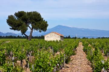 Visite des vignobles de Concha y Toro au départ de Santiago