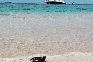 Full-Day Private Rosario Island