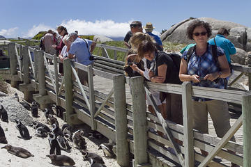 Full day Combo, Cape Point and Winelands Tour