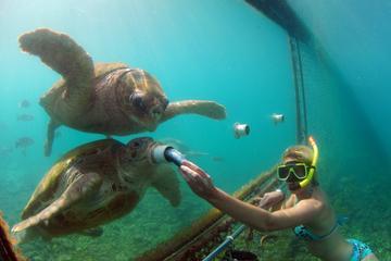 Excursão pelo litoral de Curaçao: encontro com animais e excursão com...