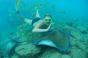 Mergulho com snorkel com arraias e...