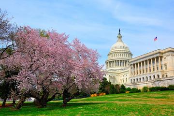 How To Experience Cherry Blossom Season In Washington Dc