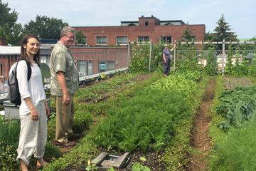 Excursão pela Agricultura urbana e alimentos sustentáveis de Montreal...
