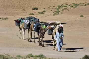 4 jours de randonnée au désert
